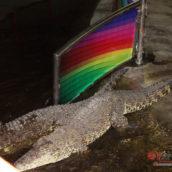 Крокодайлс шоу