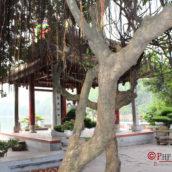 Ngoc Son Temple: Храм черепахи