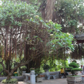 Ngoc Son Temple Đền Ngọc Sơn