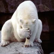 comical-animals-0401