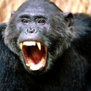 comical-animals-0496