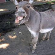comical-animals-0817
